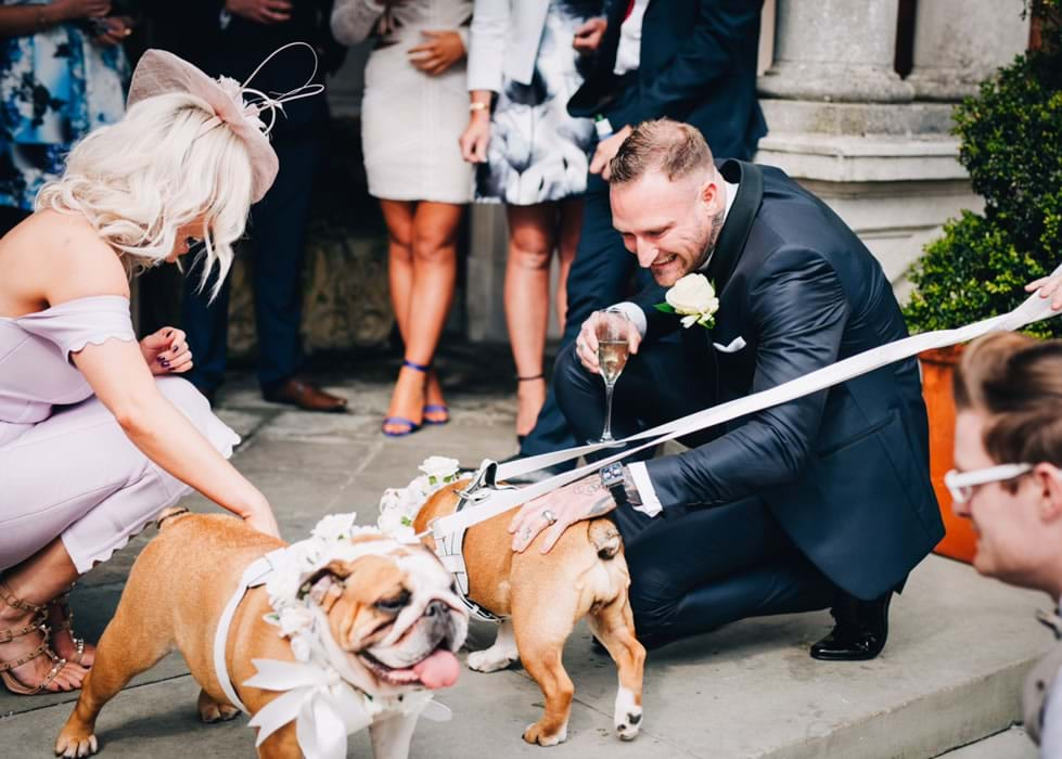 Bulldog Wedding Chaperone
